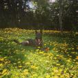 Shannen Doherty a publié une photo de sa chienne Bowie sur sa page Instagram.