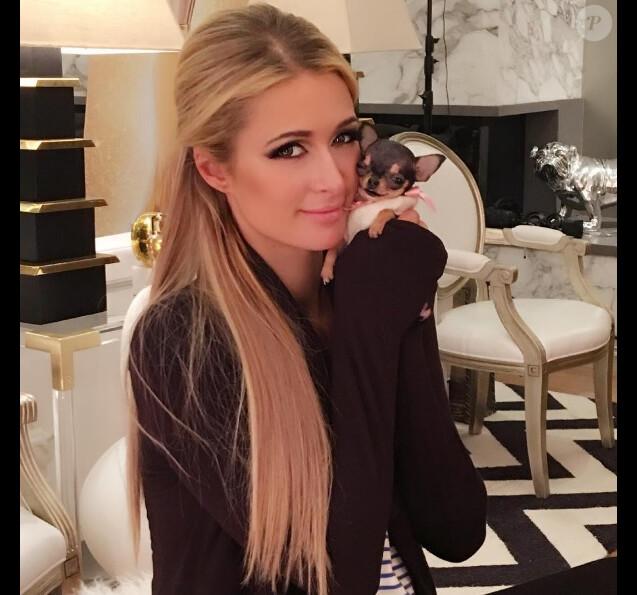 Paris Hilton présente son nouveau chihuhua (octobre 2016).