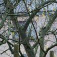 """Brigitte Macron et la reine Mathilde de Belgique visitent La Maisonnée, un centre pour personnes souffrant de handicap mental, lors d'une visite d'état en Belgique. La reine Mathilde de Belgique et Brigitte Macron ont participé à un atelier de peinture ainsi qu'à un atelier """"médias"""" où elles ont été interviewées. Belgique, Haut- Ittre, 20 novembre 2018."""