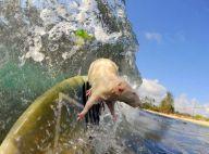 Les incroyables photos de ce rat... surfeur ! Oui, il fait du vrai surf !