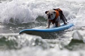 Assistez en images au Championnat du monde de surf... pour chiens !