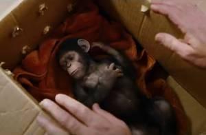 La Planète des singes : Freida Pinto et James Franco aux origines du mal !