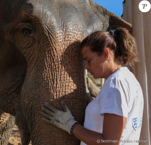 Exclusif - La princesse Stéphanie de Monaco s'occupe quotidiennement à Roc Agel des éléphantes Baby et Népal, et laissait observer leur complicité magique le 19 septembre 2013. Sauvées de la mort, elles ont désormais droit à une vie de princesses au domaine de Fonbonne, et tous les tests pratiqués confirment qu'elles sont en parfaite santé.