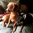 """""""Carrie Underwood a posté une photo de ses chiens sur son compte Instagram."""""""