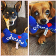 Carrie Underwood a posté une photo de ses chiens sur son compte Instagram.