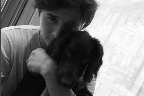 Olive Beckham : La petite chienne de la famille Beckham, star inattendue du Web