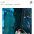 Mélanie Da Cruz dans un aquarium, à Dubaï avec Anthony Martial, mars 2017, Snapchat