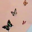 """Les fans de Kylie Jenner pensent que son bébé, une fille née le 1er février, sera baptisé Butterfly (""""Papillon"""" en français) pour les nombreux indices qu'elle a parsemés au cours des derniers mois. La jeune maman porte notamment un collier fait de papillons et a décoré la chambre de son bébé avec des papillons."""