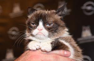 Grumpy Cat est morte : la chatte grincheuse du web avait 7 ans