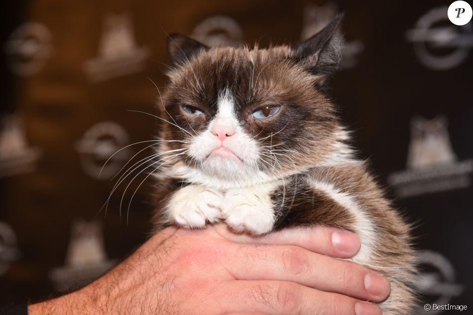 """Grumpy Cat lors de la présentation du nouveau calendrier Opel """"Georgia & Grumpy - Not impressed by Wonderland"""" à Berlin, Allemagne, le 1er février 2017."""