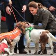 """Kate Middleton, duchesse de Cambridge, l'amie des bêtes : en pleine séance de caresses avec les chiens Max, Paddly et... """"Prince Harry"""" lors de sa visite à Keswick dans le comté de Cumbria dans le nord de l'Angleterre, le 11 juin 2019."""