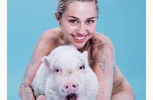 Miley Cyrus en deuil : Dévastée par la mort de son cochon, qui