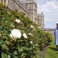"""La reine Elizabeth II a suivi la plantation de la rose """"Duc d'Edimbourg"""", nommé d'après son défunt mari le prince Philip, au château de Windsor. Le 9 juin 2021"""