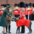 Kate caresse Domhnall, la mascotte. Le prince William, en sa qualité de colonel du régiment des Irish Guards, et la duchesse Catherine de Cambridge participaient aux Mons Barracks d'Aldershot, le 17 mars 2014, à la Saint Patrick des Irish Guards, au cours de laquelle Kate avait pour mission de distribuer l'emblématique trèfle porte-bonheur.