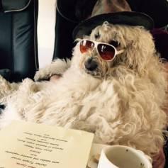 Le 29 septembre 2015, Robbie Williams rend hommage à son chien Spencer qui est décédé / vidéo postée sur Youtube.