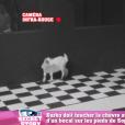"""Darko et la chèvre dans """"Secret Story 10"""" le 31 août 2016."""