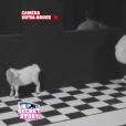 """Darko et la petite chèvre dans """"Secret Story 10"""" le 31 août 2016."""