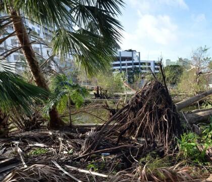 Ouragan Irma : La maison des Hallyday à Saint-Barthélémy est inhabitable