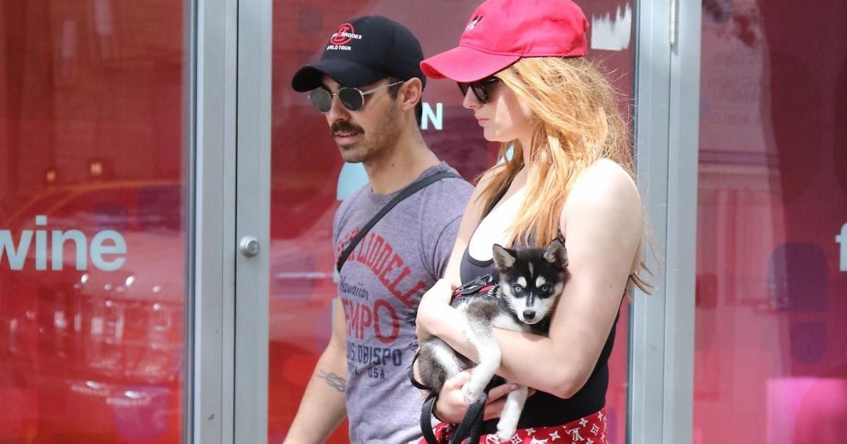 Joe jonas et sa compagne sophie turner se prom nent en amoureux avec leur adorable petit chiot - Sophie jovillard et sa compagne ...