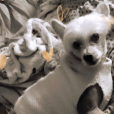 Titi, le chien de Loana, sur Instagram, le 25 juin 2019