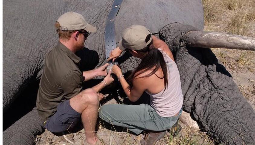 Le prince Harry et Meghan Markle au Botswana en 2017.