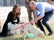 Kate Middleton, William et des chiots : caresses et croquettes avant de rentrer