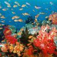 Des images de  Voyage sous les mers 3D  !