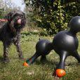 Voici le premier sex-toy pour chien !