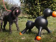 Découvrez en images le premier sex-toy pour chien ! C'est incroyable !