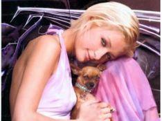 Les chiens de Paris Hilton et Nicollette Sheridan... aux enchères !