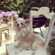 Pixie Geldof ne poste pas encore des photos de bébé sur son compte Instagram. Normal, elle n'a pas d'enfant. Elle préfère donc publier des clichés de son chien. Juillet 2013.