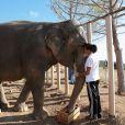 Exclusif - La princesse Stéphanie de Monaco est aux petits soins pour les éléphantes Baby et Népal, comme ici le 19 septembre 2013, devant l'objectif de Frédéric Nebinger au domaine de Fonbonne.