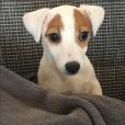 Pita, la chienne de Nabilla, a le droit à son compte Instagram