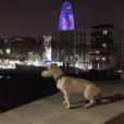 Nabilla et Thomas ont passé le Nouvel An ensemble à Barcelone. Leur chien Pita était bien sûr avec eux ! Décembre 2015.
