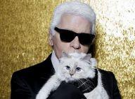 Mort de Karl Lagerfeld : sa chatte Choupette, orpheline, a une nouvelle maman !