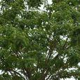 Le prince Harry retourne sur les traces de sa mère à Huambo en Angola, le 27 septembre 2019. Il s'est assis près de l'arbre baptisé Diana, en souvenir de sa mère, qui s'était rendue sur place en 1997. Le champ de mines de l'époque a laissé place à une rue animée avec des maisons, des boutiques et des écoles. Le 27 septembre 2019.