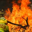 Incendies en Australie, le 7 janvier 2020. © Imago/Panoramic/Bestimage