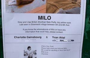 """Charlotte Gainsbourg : Son chat """"adoré"""" perdu à New York, elle est prête à tout"""