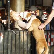 Hayden Panettiere : En mal de reconnaissance, elle embrasse un gros chien !