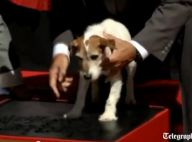 Uggie, l'attachant chien de The Artist, laisse sa patte à Hollywood Boulevard