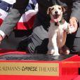 Uggie, célèbre chien de The Artist, a laissé ses empreintes sur Hollywood Boulevard