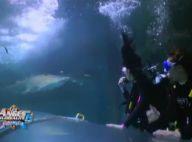 Les Anges de la télé-réalité 6 : Amélie panique face à un requin, Christie agace