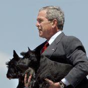 George W. Bush en deuil : Mort de Miss Beazley, la chienne de l'ancien président