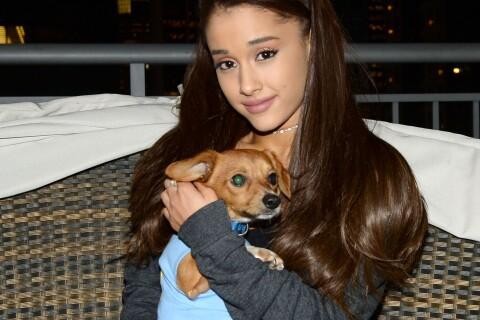 Ariana Grande furax : Ses chiots menacés de mort et sa mère ''retenue en otage''