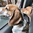 Meghan Markle, ses chiens Guy et Hobart en voiture, photo Instagram 30 octobre 2016