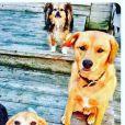Guy et Hobart, les chiens de Meghan Markle, prennent la pose, photo Instagram août 2016