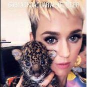 Katy Perry : Taclée pour ses photos avec des animaux sauvages...