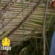 """Steeve dans """"Koh-Lanta, la guerre des chefs"""" (TF1) lors de l'épisode diffusé vendredi 12 avril 2019."""