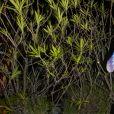 Exclusif - Sarah Lopez - Soirée du groupe Martell Blue Swift sur la suite Sandra and Co lors du 72ème Festival International du Film de Cannes le 20 mai 2019.© Pierre Perusseau/Bestimage