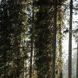 Felix Leitner (AUT), Philipp Horn (GER), Fabien Claude (FRA) - Championnats du monde de biathlon 2020 (IBU World Cup Biathlon 2020) - 20km Hommes à Pokljuka le 23 janvier 2020. © Gepa / Panoramic / Bestimage